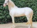 Lusitano Verkaufspferde Idolo 1