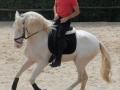 Lusitano Verkaufspferde Idolo 10