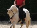 Lusitano Verkaufspferde Idolo 11