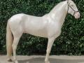 Lusitano Verkaufspferde Idolo 2