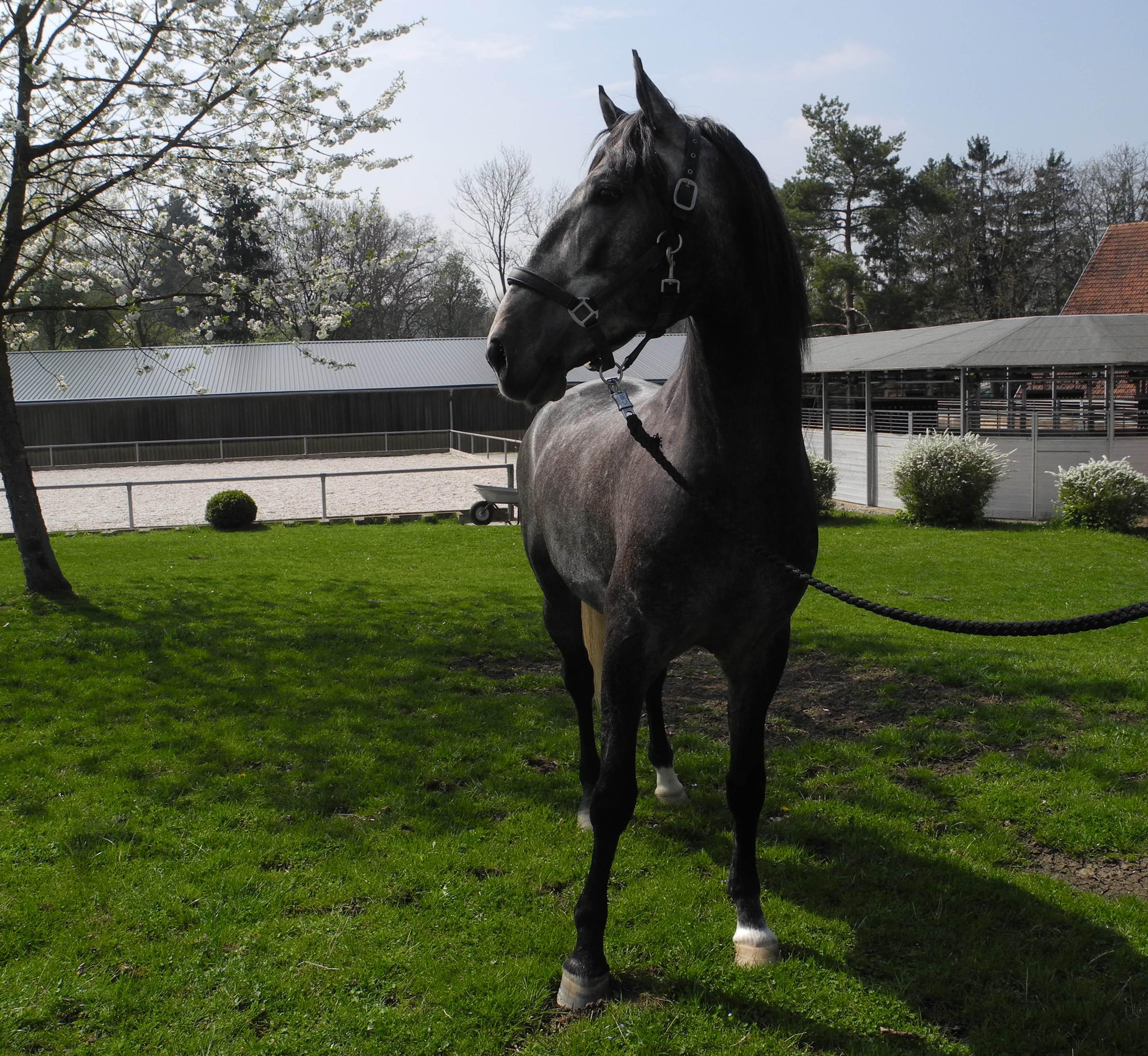richtiger hufbeschlag beim pferd
