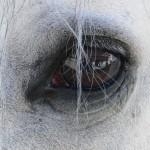 Zeus Auge