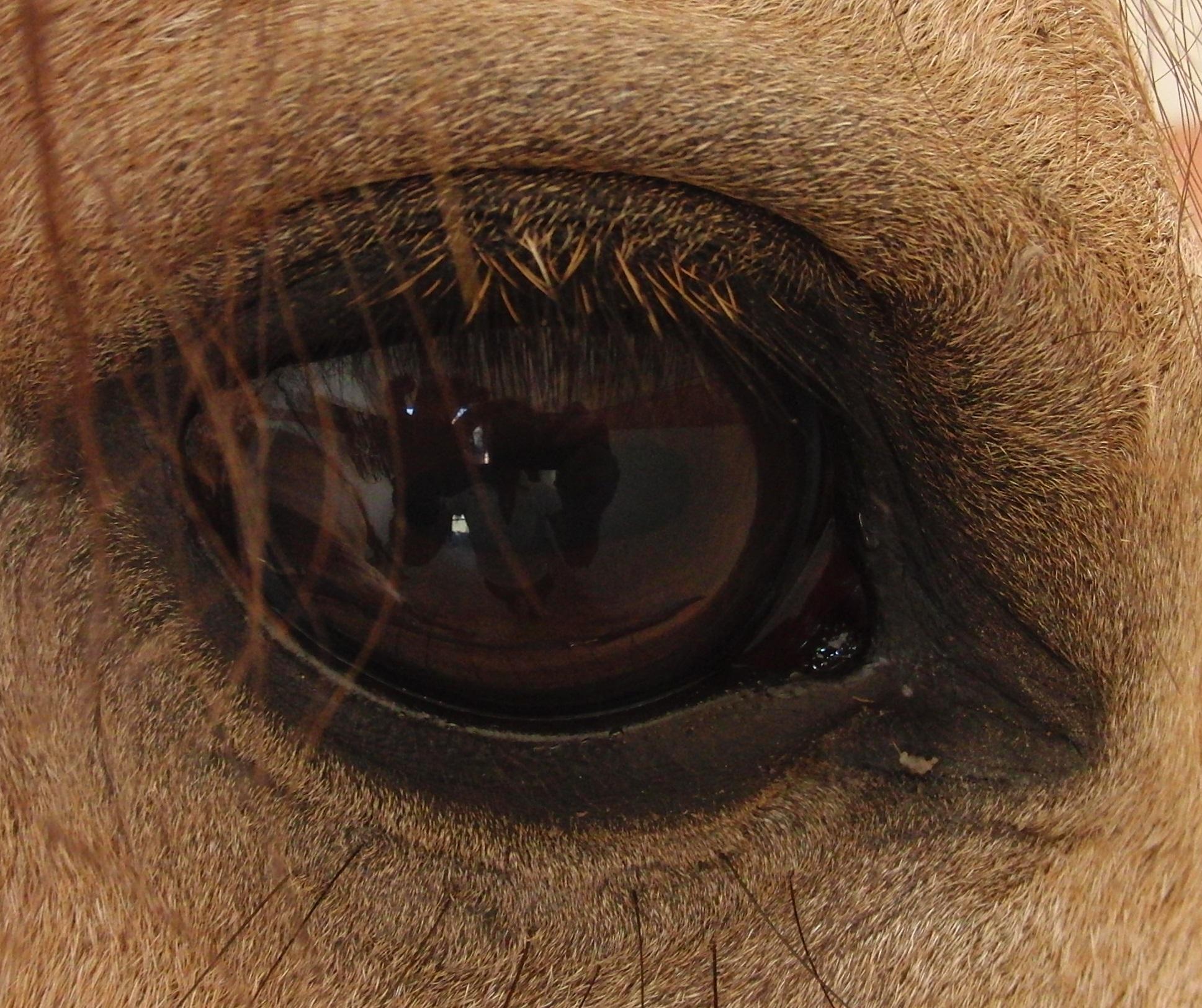 Auge Encantandos